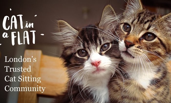 Lightning Pitch: Cat in a Flat – London's trusted cat sitting community