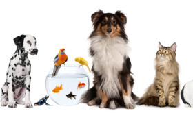 The U.S. pet industry: How it's the perfect foundation for getting into franchising