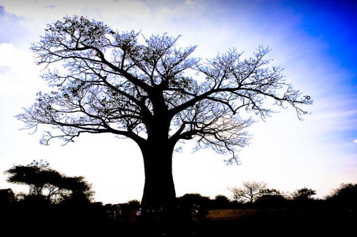 VR startup Baobab Studios closes $25m in Series B funding