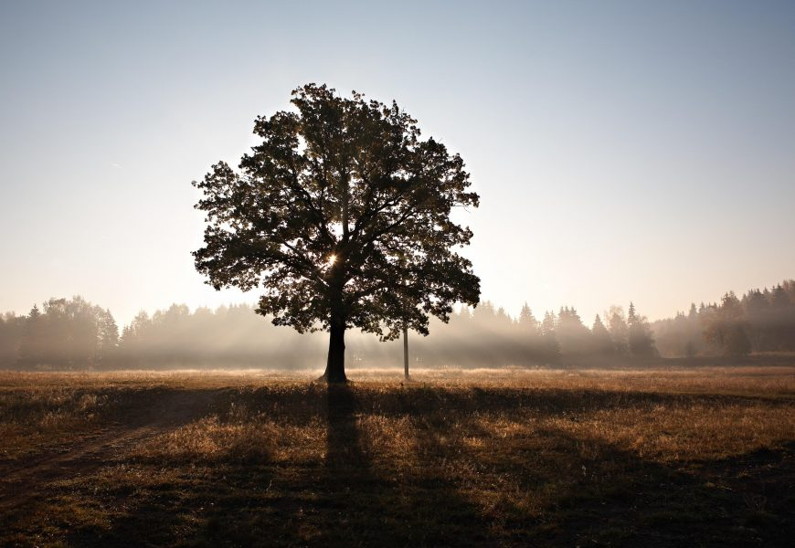 UK startup planning to plant 1 billion trees with drones