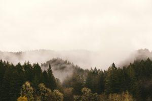 startups trees planet
