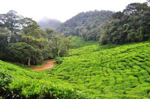 colombia farm