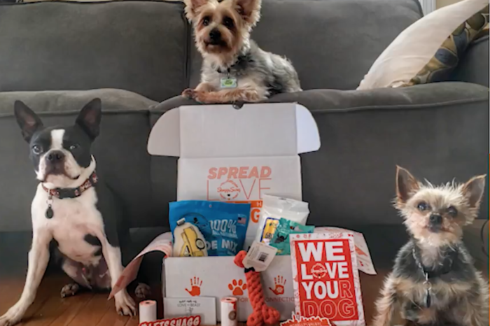 ShaggySwag: the startup that wants to fill every dogs' toy bin