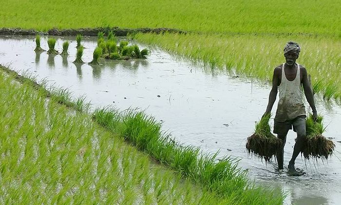 How Microsoft is partnering with Land O' Lakes in India to help sustainable farming